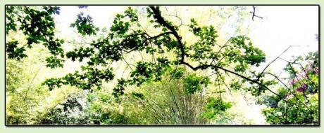 樟树开花 - 读札网
